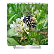 Bumblebee On White Clover Shower Curtain