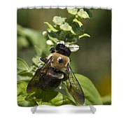 Bumblebees And Basil Shower Curtain