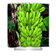 Bunch Of Bananas Shower Curtain