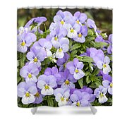 Bunch Of Pansy Flowers Shower Curtain