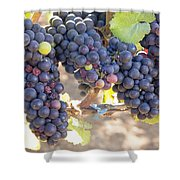 Bunches Of Red Wine Grapes Shower Curtain