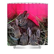 Bunnies In Pink Shower Curtain