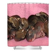 Bunny Baby Boom Shower Curtain