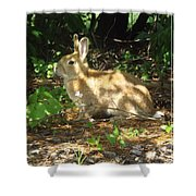 Bunny In The Wild 2 Shower Curtain