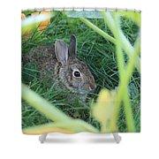 Bunny Rabbit Shower Curtain