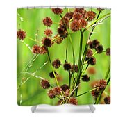 Bur-reed Shower Curtain