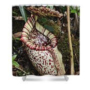 Burbidges Pitcher Plant Sabah Borneo Shower Curtain