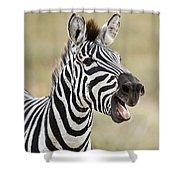 Burchells Zebra Equus Quagga Burchellii Shower Curtain