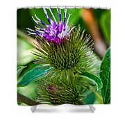 Burdock Shower Curtain
