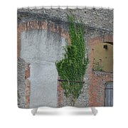 Window With Ivy Shower Curtain