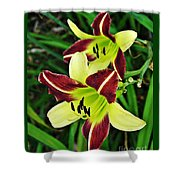 Burgundy And Yellow Lilies 2 Shower Curtain