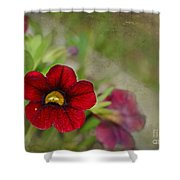 Burgundy Calibrochoa Blank Greeting Card Shower Curtain