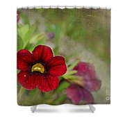 Burgundy Calibrochoa Blank Greeting Card II Shower Curtain