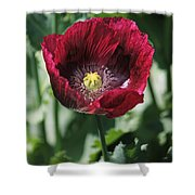 Burgundy Poppy Shower Curtain