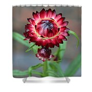 Burgundy Straw Flower Shower Curtain