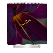 Burgundy Wine Shower Curtain