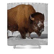 Burly Bison Shower Curtain