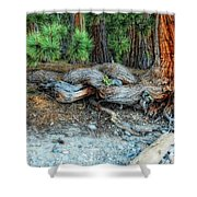 Burly Shower Curtain by Donna Blackhall