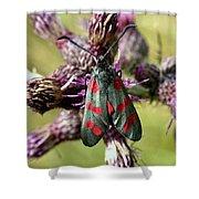 Burnett Moth Shower Curtain