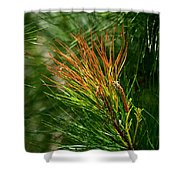 Burnished Pine Shower Curtain
