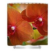 Burnt Orange Orchids Shower Curtain