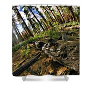 Burnt Tree In A New Forest. Shower Curtain