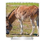 Burro Equus Asinus Shower Curtain
