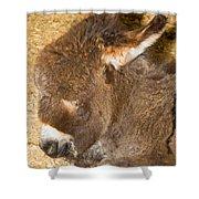 Burro Foal Shower Curtain