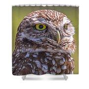 Burrowing Owl 001 Shower Curtain
