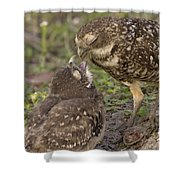 Burrowing Owl Feeding It's Chick Photo Shower Curtain
