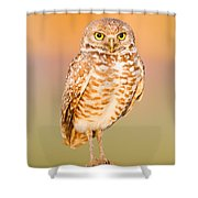 Burrowing Owl II Shower Curtain
