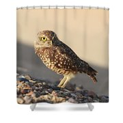 Burrowing Owl II Shower Curtain