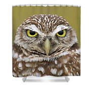 Burrowing Owl, Kaninchenkauz Shower Curtain