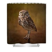 Burrowing Owl Portrait Shower Curtain by Kim Hojnacki
