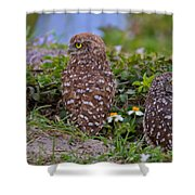 Burrowing Owl Siblings Shower Curtain