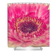 Burst Of Beauty Dahlia  Shower Curtain
