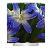 Burst Of Glory Shower Curtain