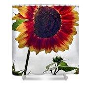Burst Of Sunflower Shower Curtain