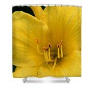Burst Of Yellow Shower Curtain