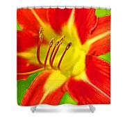 Bursting Bold Shower Curtain