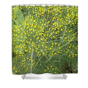 Bursting Dill Plant Shower Curtain