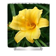 Bursting Lily  Shower Curtain