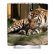 Busch Tiger Shower Curtain