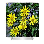 Bush Daisy  Shower Curtain