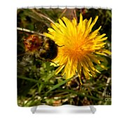 Bussy Bee And Dandelion Shower Curtain