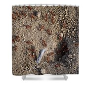 Busy Ants Shower Curtain