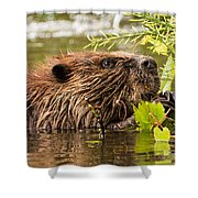 Busy As A Beaver Shower Curtain