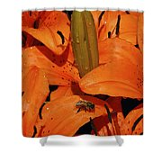 Busy Bee - 774 Shower Curtain