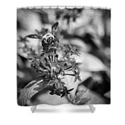 Busy Bee - Bw Shower Curtain