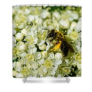 Busy Bee On A Rowan Flowers - Featured 3 Shower Curtain